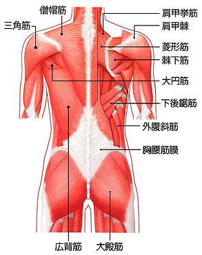 チューコレ・筋膜リリース|ボディエステメニュー